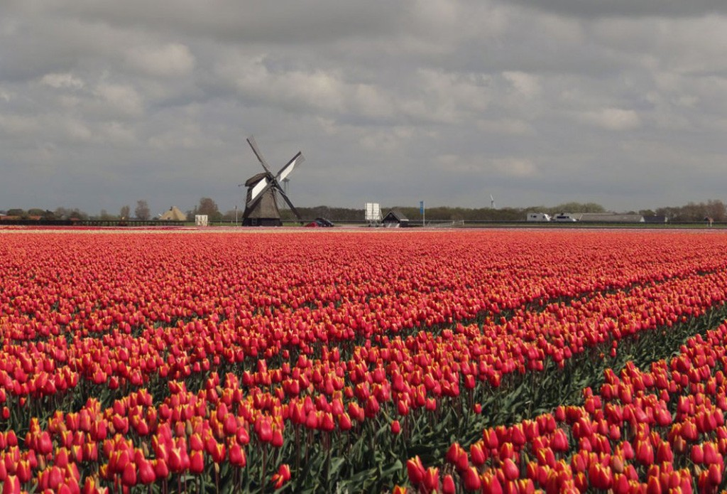 Netherlands – Bicycles, Tulips, Windmills, Canals, And More Bicycles